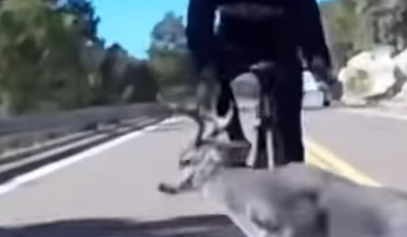 (VÍDEO) ¡Espectacular caída de un ciclista al toparse con un ciervo!