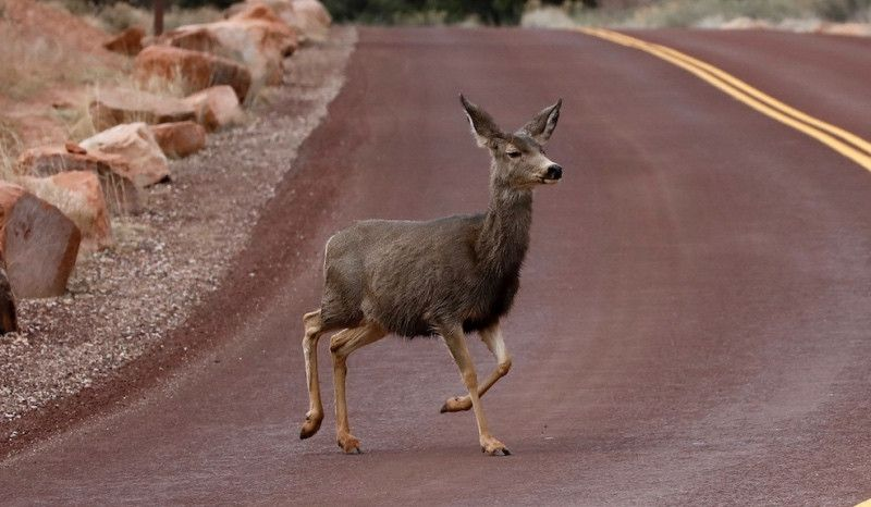 (VÍDEO) Cuando bajas a 65 km/h y un ciervo se cruza en tu camino