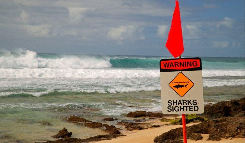 Otro ataque mortal de un tiburón en Hawaii