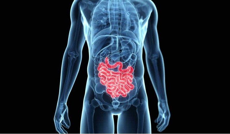 Una bacteria del intestino potencia el alto rendimiento de los atletas de élite