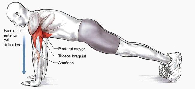 Cuáles son los 2 ejercicios básicos de fuerza de brazos en la ...